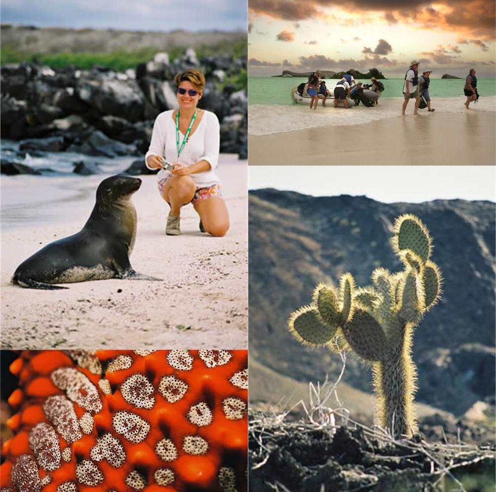 Gone Galapagos