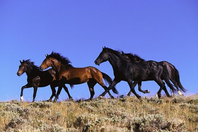 Escape to Where Horses Run Wild