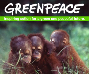 greenpeace box monkey