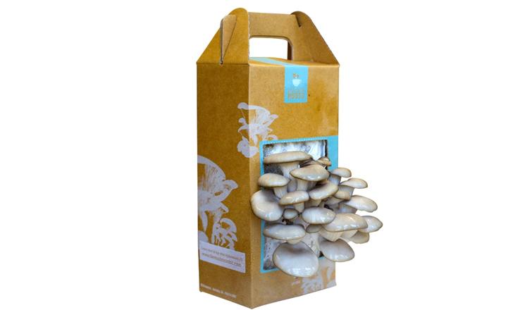 Mushrooms, Home Grown