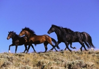 Escape to Where Horses Run Wild