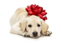 Gifts That Give Back: 4 Perfect Presents for Pets
